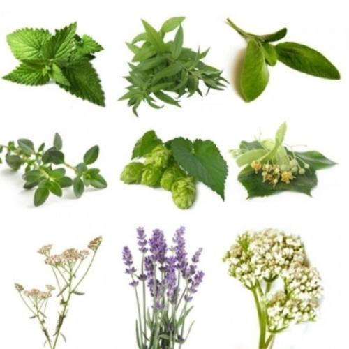 BIO Herb Pack I (10 herbs)