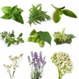 BIO Herb Pack IV (5 Herbs)