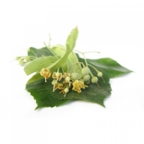 Lime Blossoms (Tilia cordata MILL.) BIO