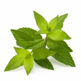 Peppermint Leaves (Mentha piperita L.) BIO